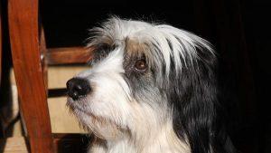Catálogo de caida de pelo perros para comprar online – Los 20 mejores