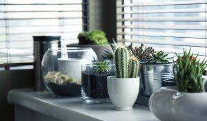 Catálogo de aloe vera interior para comprar online – Los preferidos por los clientes