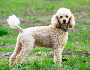 La mejor selección de caida de pelo en perros para comprar – Los más solicitados