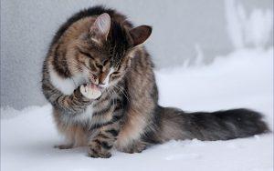 La mejor lista de caida de pelo de gato para comprar Online