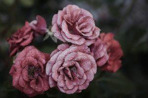 La mejor recopilación de crema hidratante día rosa bulgaria para comprar por Internet – Los preferidos