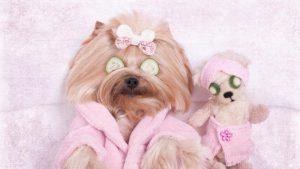 Ya puedes comprar Online los caida de pelo en perros de pelo corto – Los 30 más vendidos