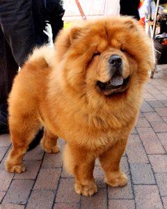 Selección de caida de pelo de mi perro para comprar por Internet