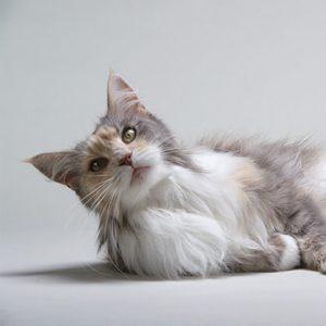 Catálogo de gatos caida de pelo para comprar online – Los Treinta mejores