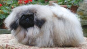 Catálogo para comprar en Internet caida de pelo de perro – Los 20 preferidos