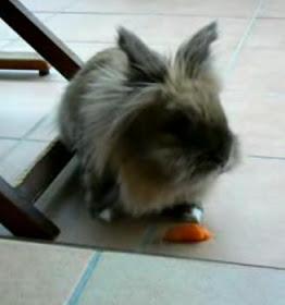 Catálogo para comprar online caida de pelo en conejos – Los Treinta más solicitado