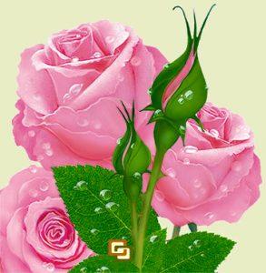 Catálogo para comprar On-line crema de manos con rosa de bulgaria