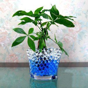 El mejor listado de gel plantas para comprar On-line – Los mejores