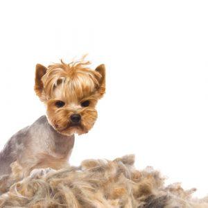 El mejor listado de evitar caida de pelo en gatos para comprar – El TOP 30