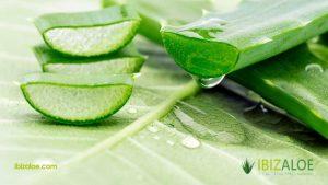 Opiniones y reviews de planta aloe vera propiedades para comprar Online