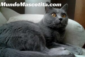 Recopilación de caida de pelo en gatos causas para comprar en Internet