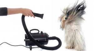 Catálogo para comprar online los mejores secadores de pelo del mundo