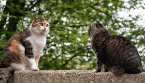 El mejor listado de caida del pelo de los gatos para comprar online