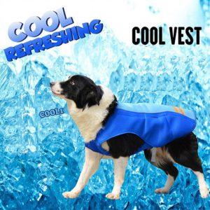 Ya puedes comprar Online los crema solar para perros – Los mejores