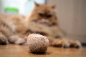 Catálogo para comprar epoca de caida de pelo en gatos – Los mejores