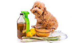 Lista de champu casero para perros para comprar online