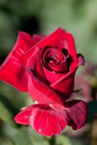 herbalist crema de manos flor de japon que puedes comprar on-line – El Top Treinta