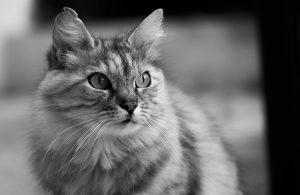 Opiniones y reviews de caida de pelo de los gatos para comprar en Internet