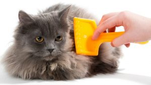 La mejor lista de caida de pelo gato para comprar